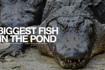 biggest fish in the pond