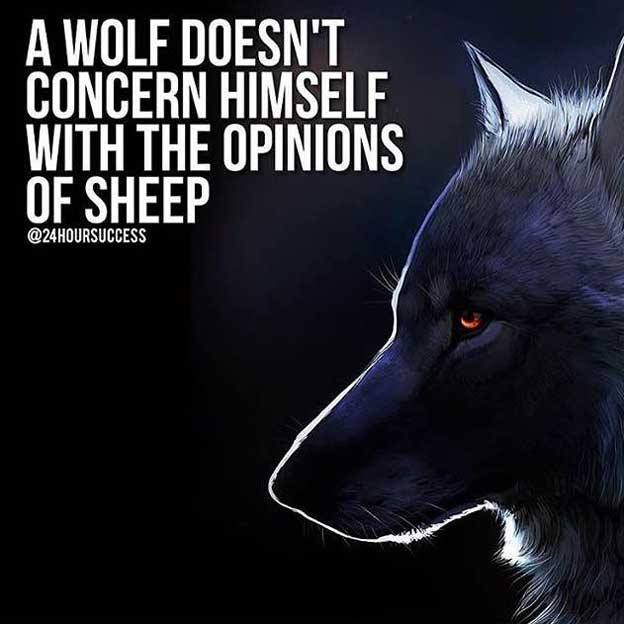 Wolf pack quotes Wolves Quote