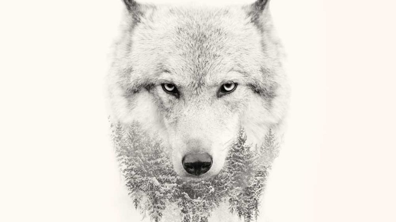 20 Strong Wolf Quotes To Pump You Up | Wolves & Wolfpack Quotes