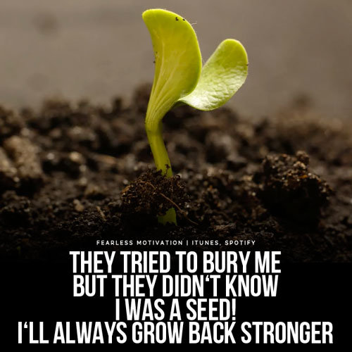 They Tried To Bury Me But They Didn't Know I Was A Seed