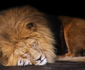 Defeat Laziness: 5 Ways to Take Action When You're Not Motivated