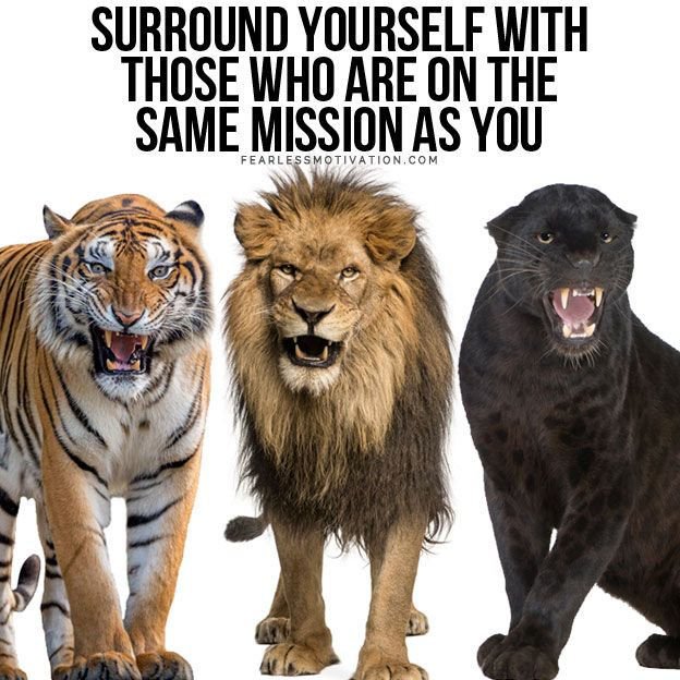surround yourself with those on the same mission as you hungry strong loyalty friendship mates fearless motivation quote lion brotherhood pride big cat 5 Choices You Will Regret Forever (Don't Make These Mistakes)